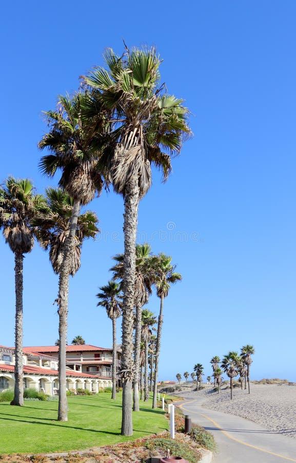 Costal Palms along Mandalay Beach Walkway, Oxnard, CA. Tall palms growing next to warm sands of Mandalay Beach in Oxnard, California royalty free stock photo