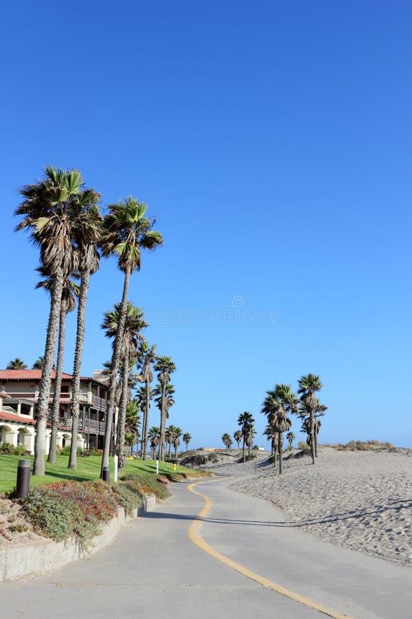 Costal Palms along Mandalay Beach Walkway, Oxnard, CA. Tall palms growing next to warm sands of Mandalay Beach in Oxnard, California stock image