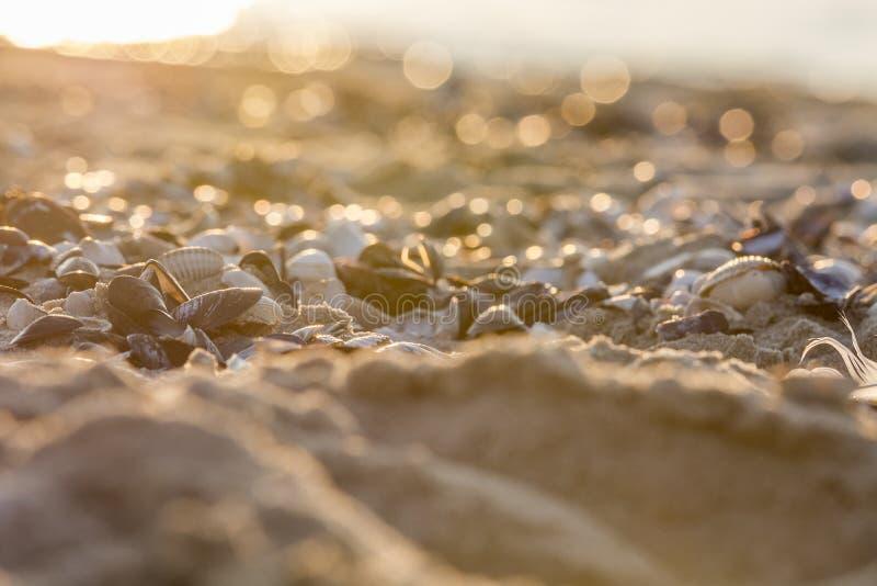 Costas del Mar del Norte fotografía de archivo
