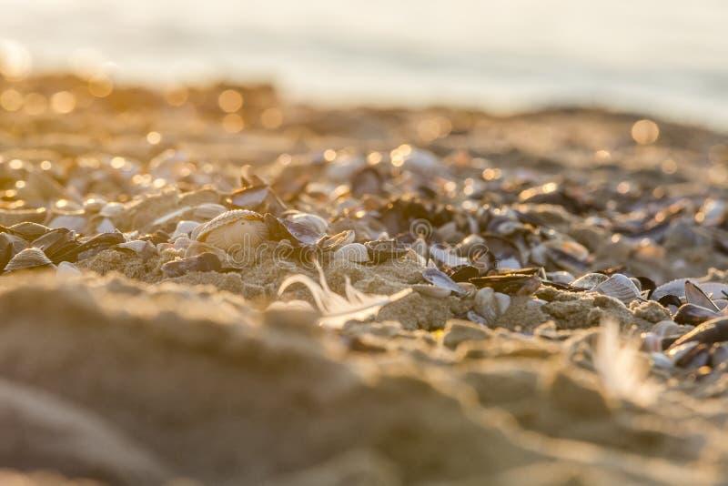 Costas del Mar del Norte foto de archivo