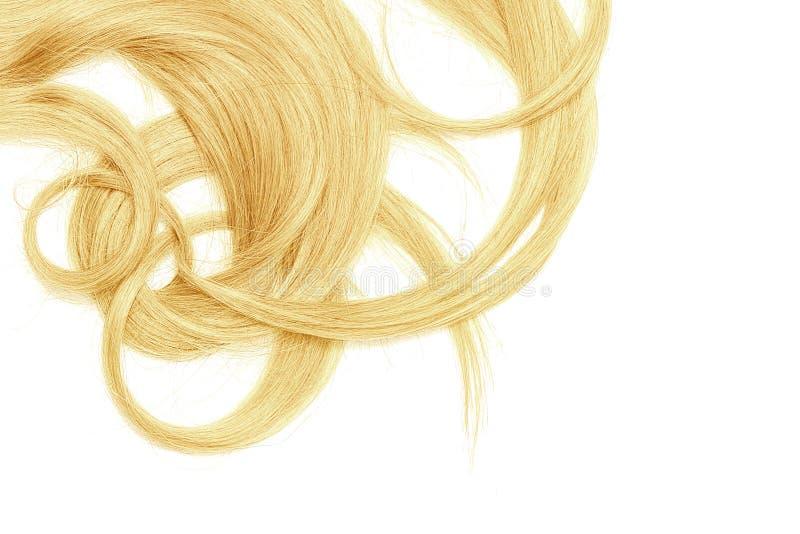 Costas do cabelo longo, torcido, louro isolado no fundo branco fotografia de stock