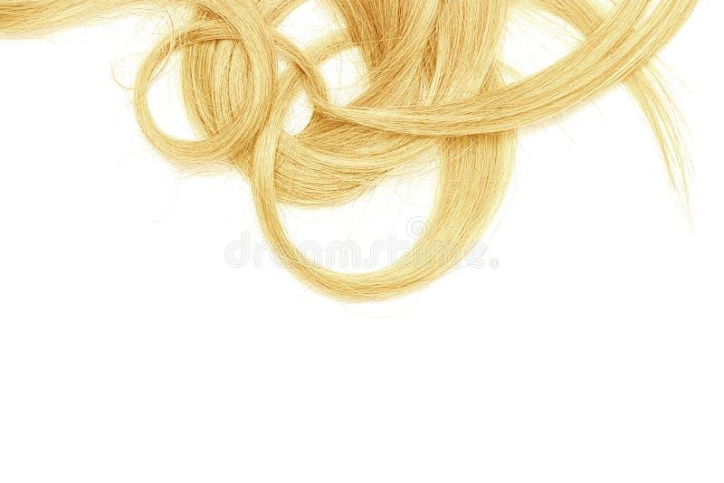 Costas do cabelo longo, torcido, louro isolado no fundo branco fotos de stock