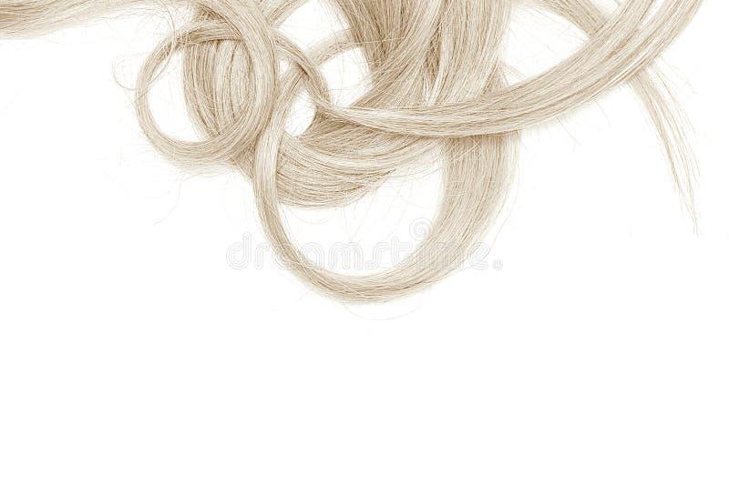 Costas do cabelo longo, torcido, louro isolado no fundo branco imagens de stock
