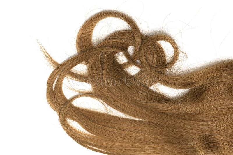 Costas do cabelo longo, torcido, marrom isolado no fundo branco fotos de stock