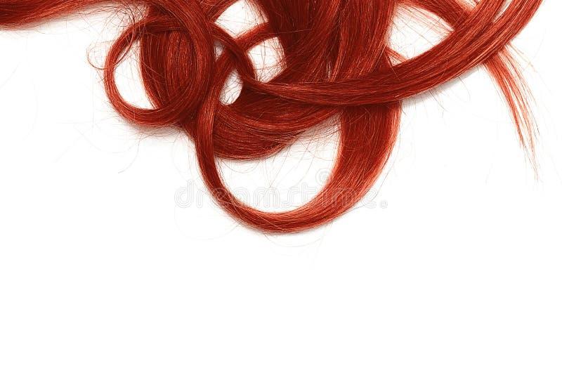 Costas do cabelo longo, torcido, vermelho isolado no fundo branco foto de stock royalty free