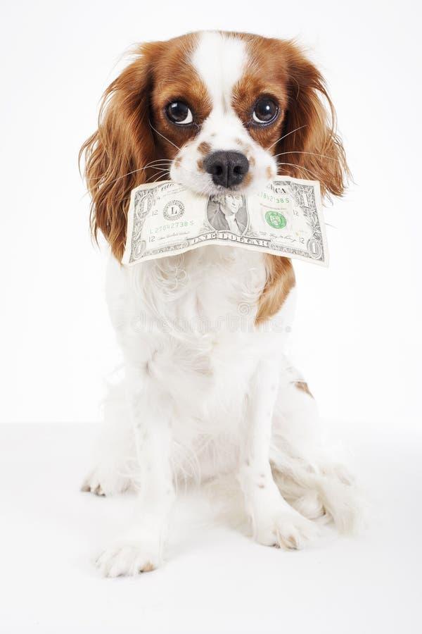 Costi del cane Costi animali dell'animale domestico Insegua la banconota in dollari dei soldi della tenuta su fondo bianco isolat fotografie stock