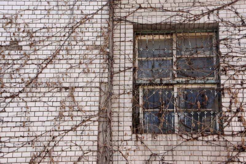Costruzione abbandonata con il rampicante asciutto fotografia stock