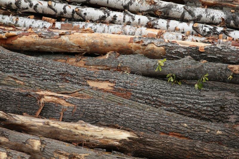 Costruzione registrante di legno di albero della pila della betulla della quercia del fondo orizzontale dei tronchi fotografia stock libera da diritti