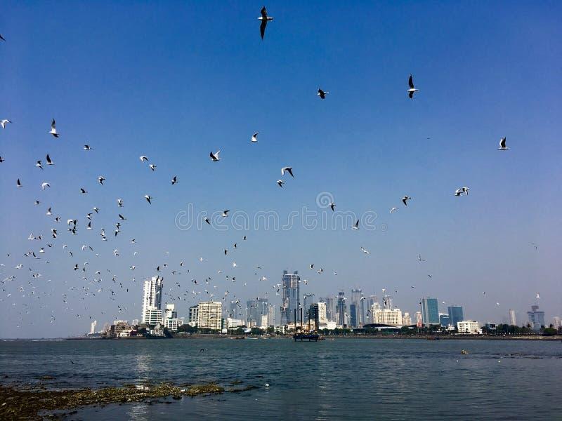 Costruzioni degli uccelli degli azzurri fotografia stock libera da diritti