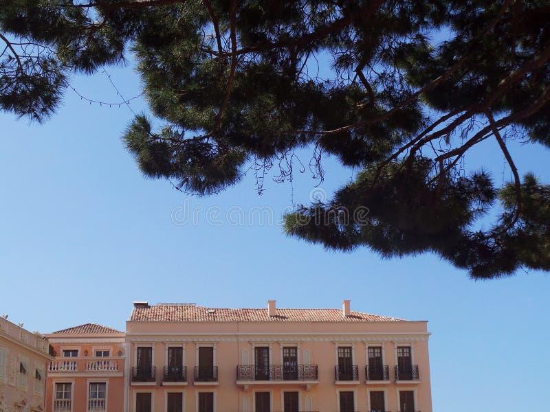 Costruzioni del pino della Francia Monaco Cote d Azur vecchie immagine stock libera da diritti