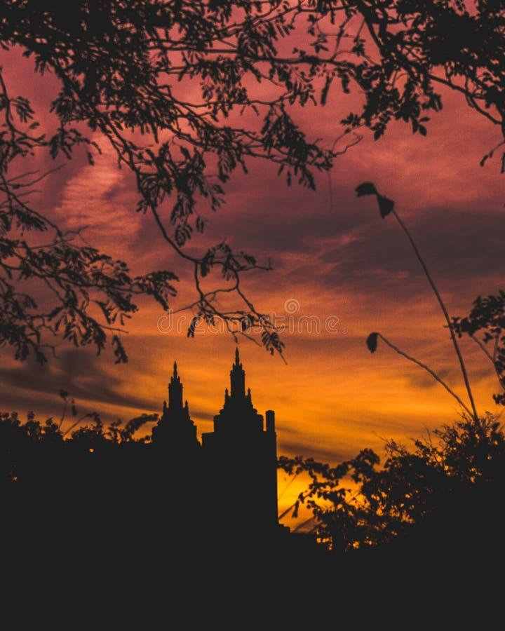 Costruzioni di tramonto del Central Park attraverso gli alberi immagini stock libere da diritti