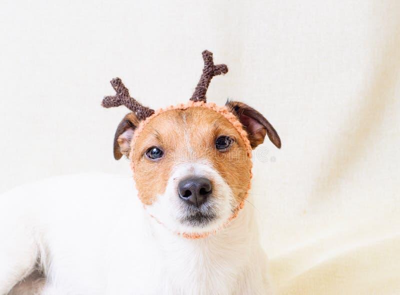 Costume de Noël des andouillers de port de chien drôle d'†de renne « images stock