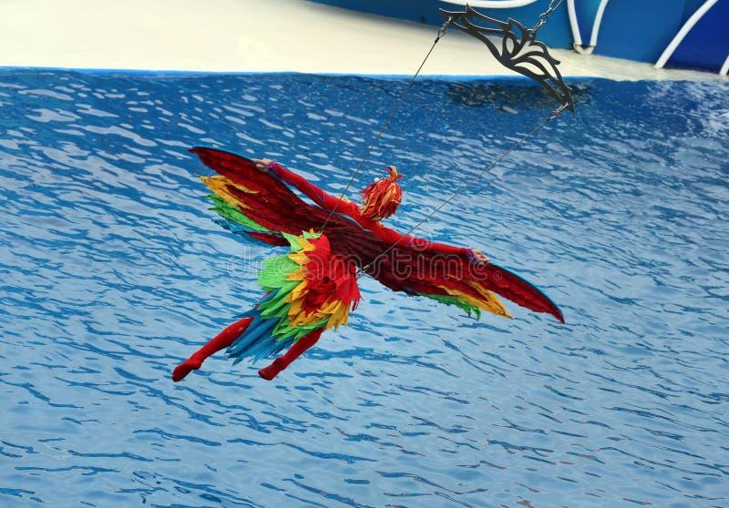 Costume de perroquet images stock