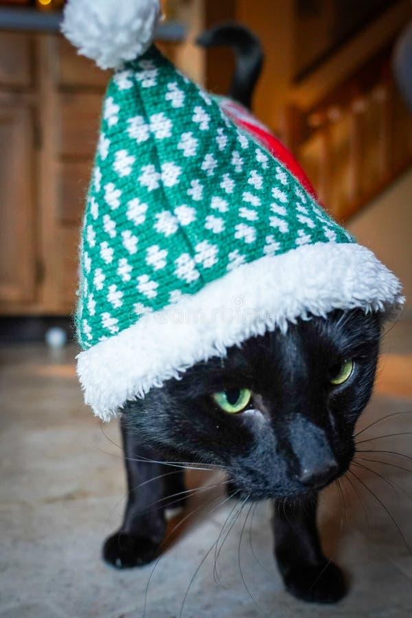 Costume de port de Noël de chat noir photos libres de droits