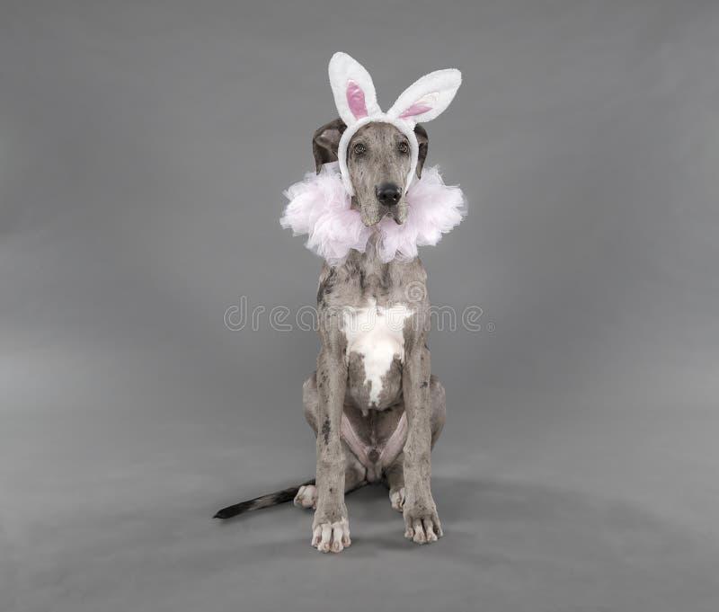 Costume del cucciolo della ballerina di Pasqua fotografia stock