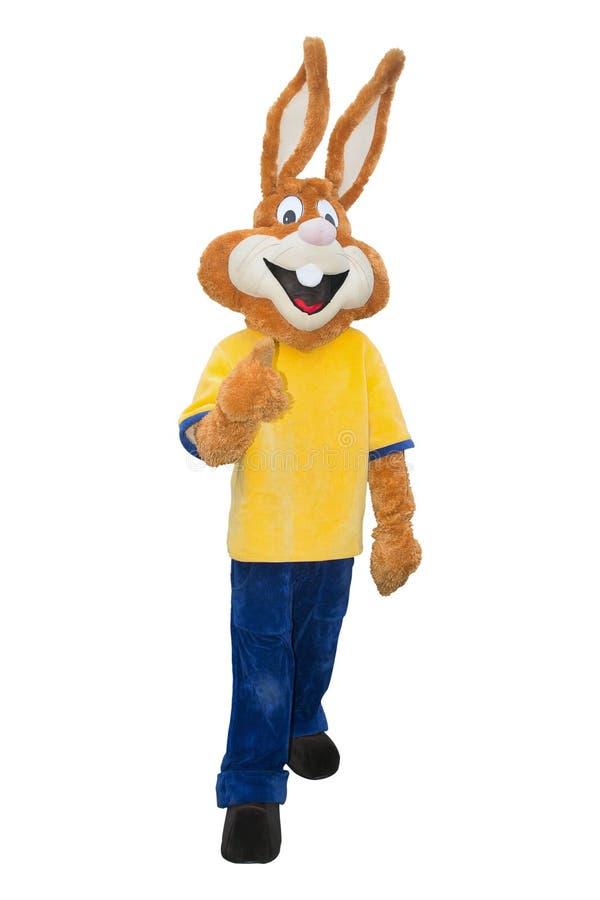Costume della mascotte del coniglietto isolato su fondo bianco immagini stock
