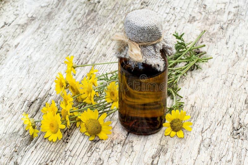 Cota tinctoria (Anthemistinctoria) och farmaceutisk flaska royaltyfria foton