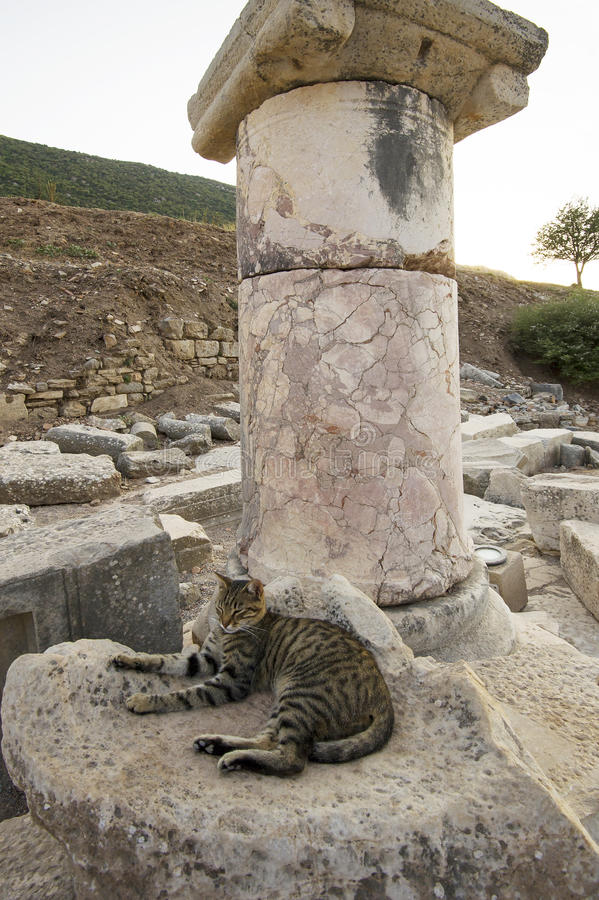 Cote, a resident of the ancient city of Ephesus at the foot of the marble columns. Ephesus. Turkey royalty free stock image