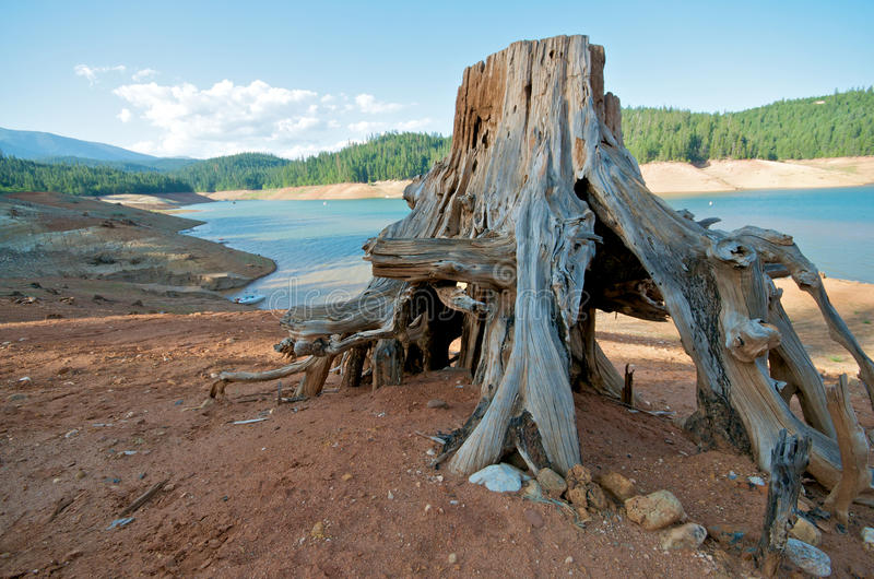 Coto da árvore em um lago foto de stock royalty free