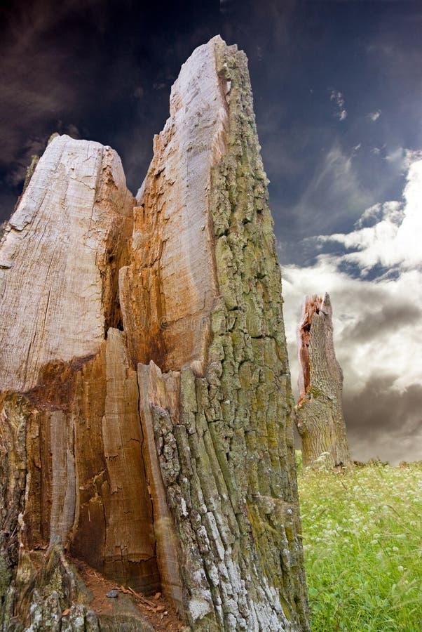 Coto da árvore quebrada antiga imagens de stock royalty free