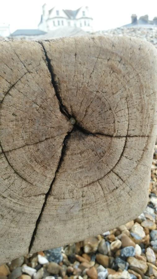 Coto de árvore imagem de stock