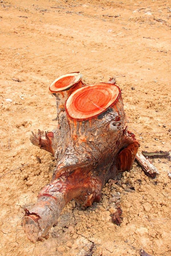 Coto de árvore após o desflorestamento fotografia de stock