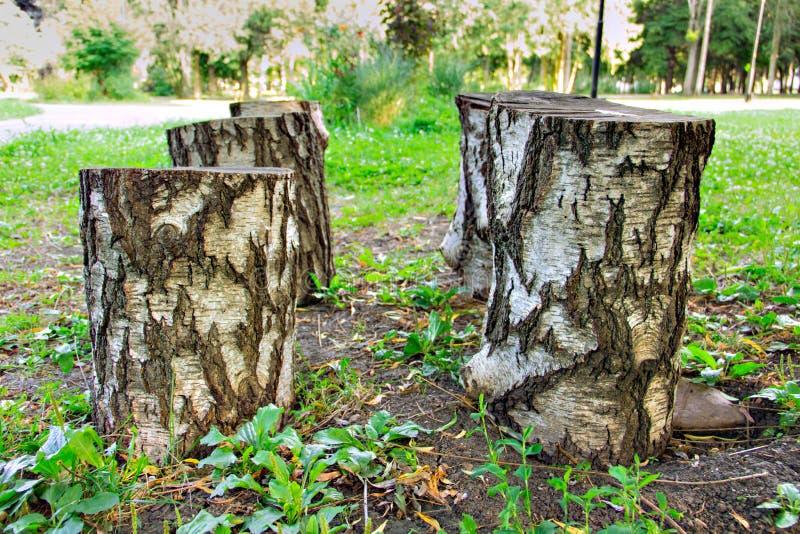 Coto de árvore, desflorestamento imagem de stock