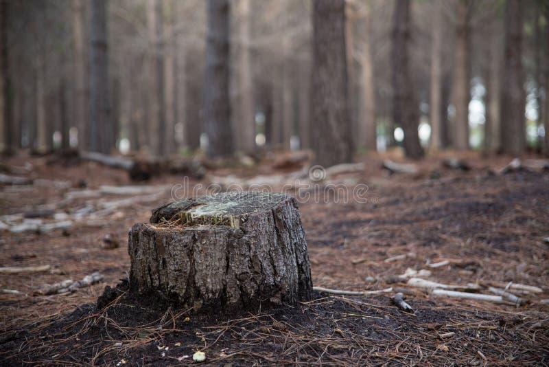 coto de árvore do desflorestamento imagens de stock