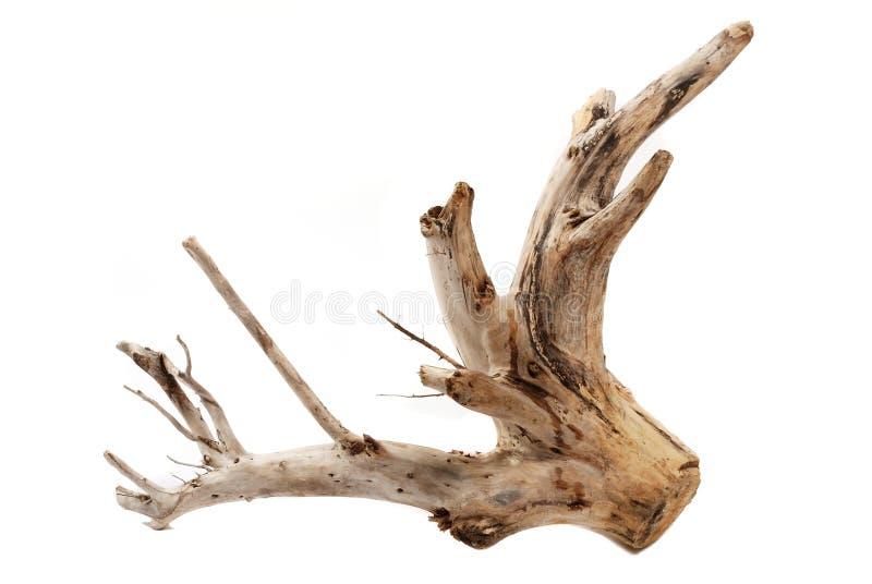 Coto de árvore do Driftwood no fundo branco imagens de stock