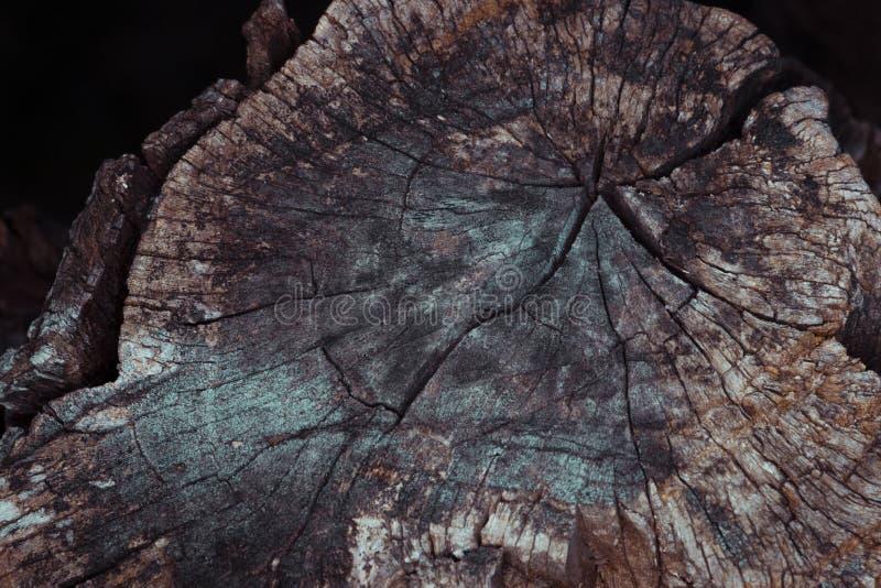 Coto de árvore envelhecido velho da ameixa fotografia de stock