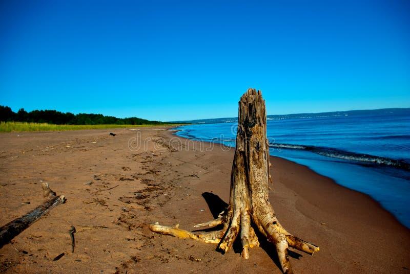 Coto de árvore inoperante em um Sandy Beach ao longo da costa do lago imagem de stock