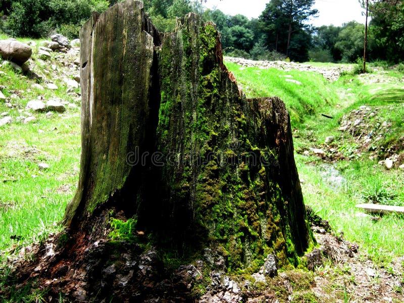 Coto de árvore musgoso imagens de stock royalty free