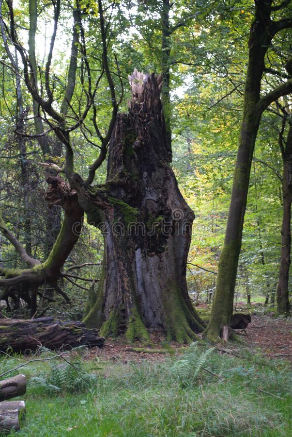 Coto de árvore quebrado imagens de stock royalty free