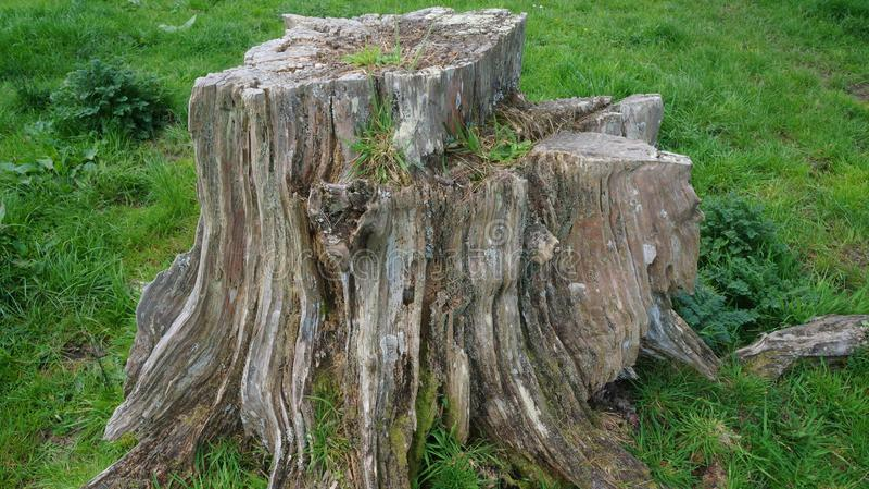 Coto de árvore velho rotting na exploração agrícola imagens de stock