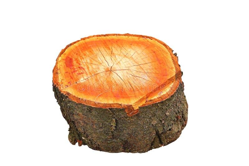 Coto de madeira isolado da árvore de cereja fotos de stock royalty free