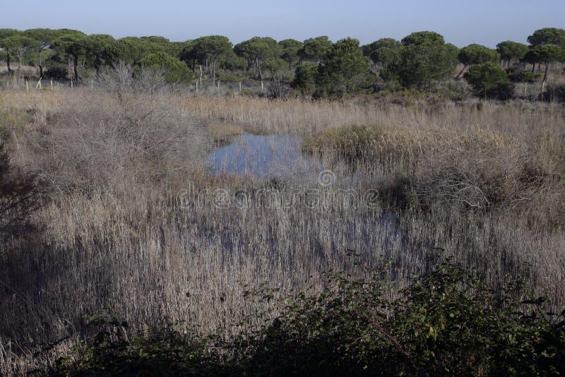 Coto Donona National Park fotografie stock