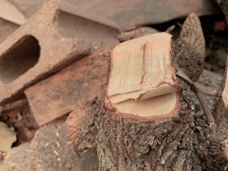Cotoes atarracados, desflorestamento, madeira que processa, textura de madeira fotografia de stock royalty free