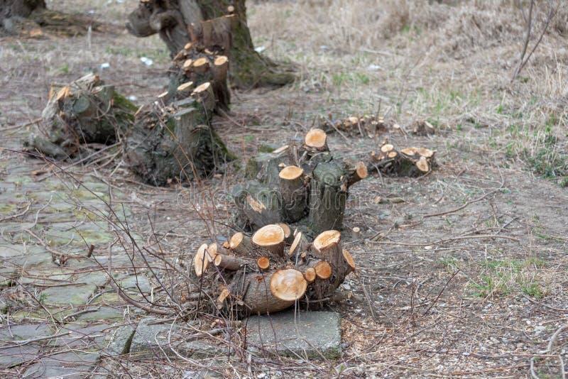 Cotoes de árvore após o desflorestamento situado em torno de Alemanha nos sem-fins fotografia de stock