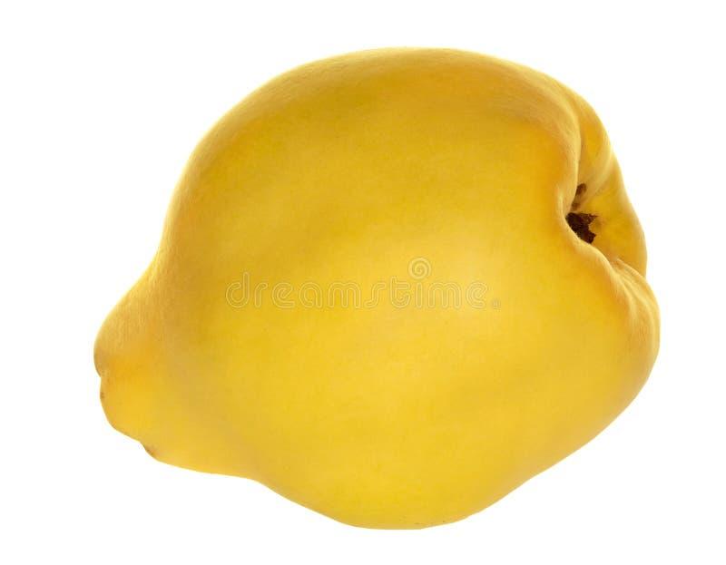 Cotogna gialla isolata su bianco immagini stock