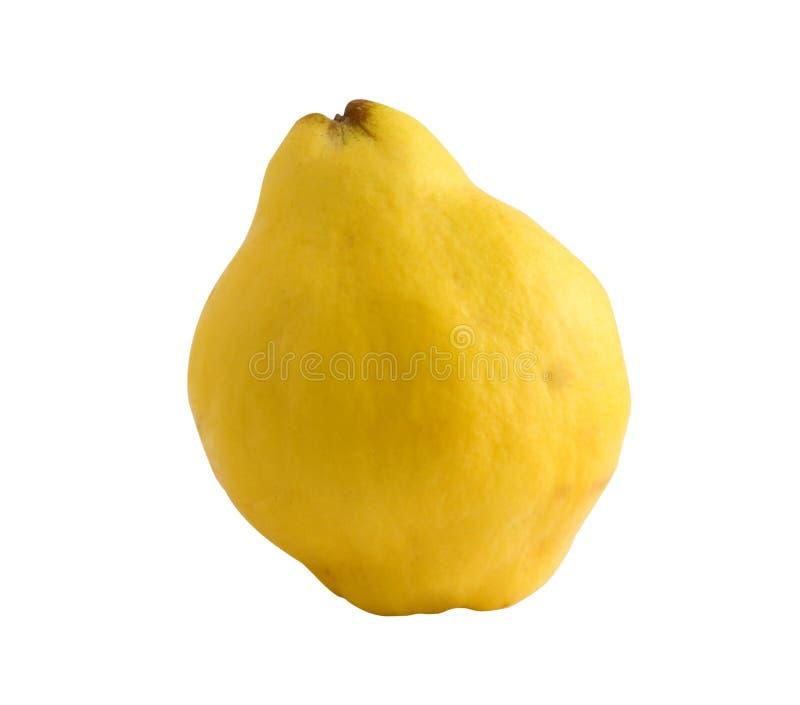 Cotogna (mela dorata) fotografia stock