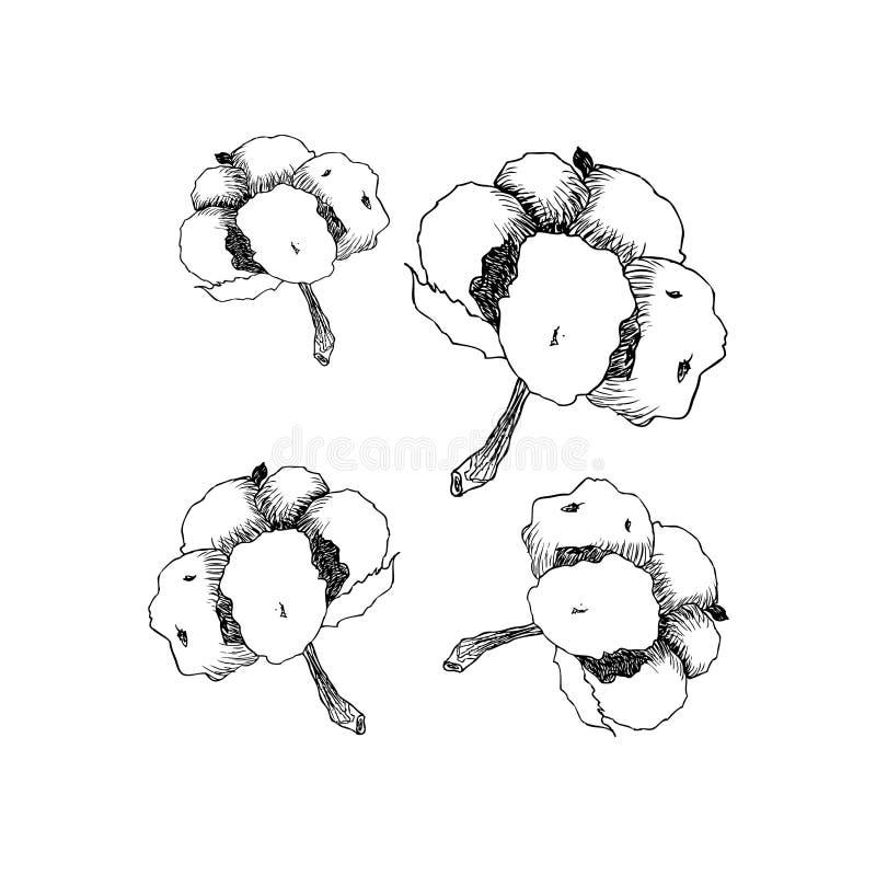 Coton tiré par la main de vecteur eco 100 Bourgeon floraux de coton dans le style gravé par vintage illustration libre de droits