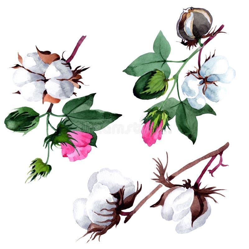 Cotone con il fiore in uno stile dell'acquerello isolato illustrazione vettoriale