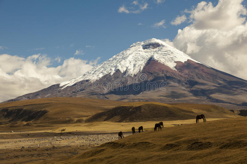 Cotopaxi, an active volcano, Ecuador stock photography