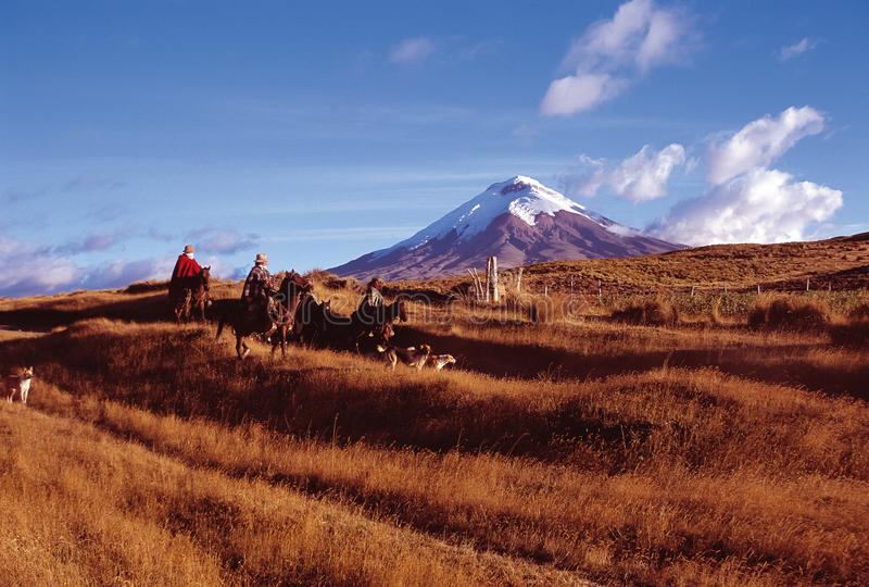 Cotopaxi. `Chagras` cowboys riding on the moors of Cotopaxi National Park royalty free stock photos