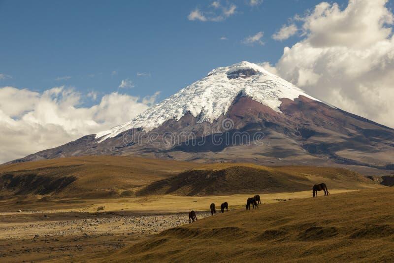 Cotopaxi, ein aktiver Vulkan, Ecuador stockfotografie