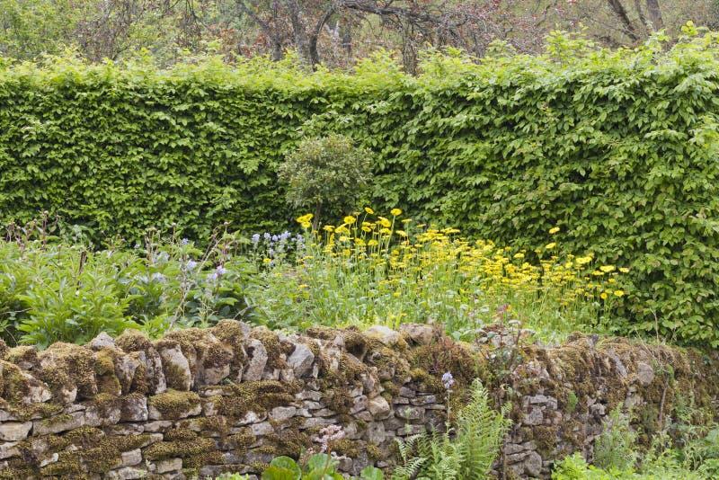 Cotswolds empiedra la cerca, seto verde en un jardín salvaje foto de archivo libre de regalías