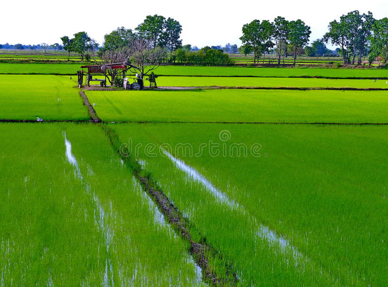 Download Cottage stock image. Image of nature, farm, rice, background - 26455795