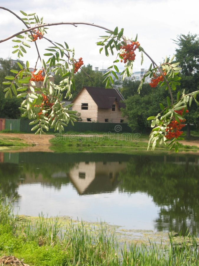 Cottage and ashberry royalty free stock images