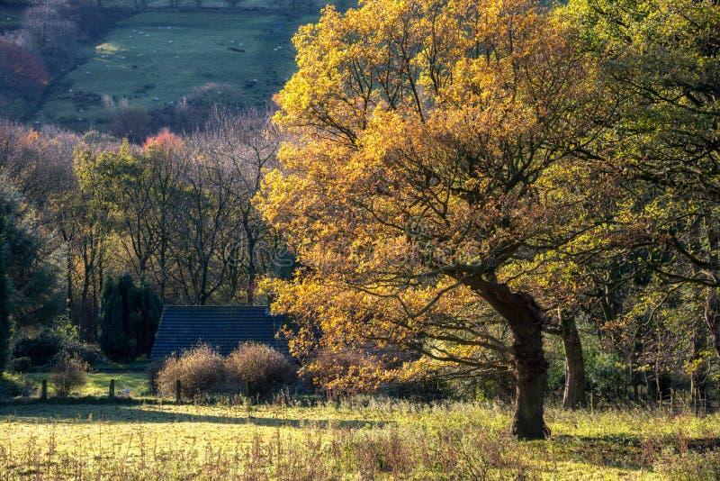 Cottage Autumn England R-U image stock