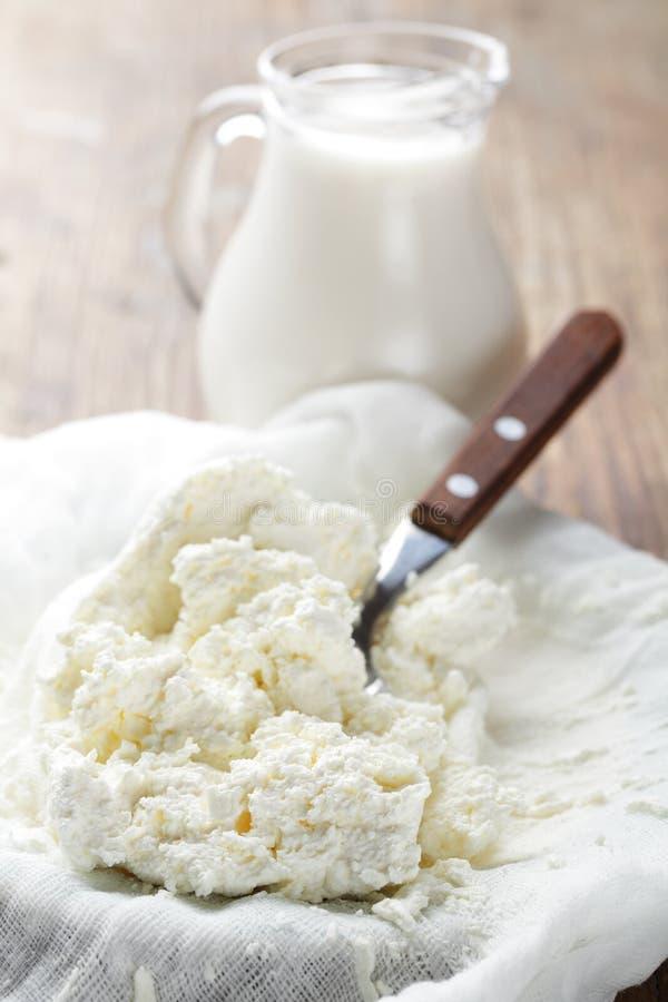 Cottage cheese closeup stock photo